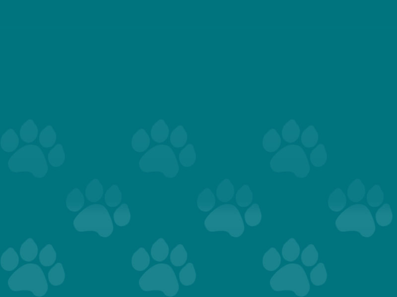 Dark Blue Gradient Paw Prints | Saving Grace Pet Food Bank, Inc.