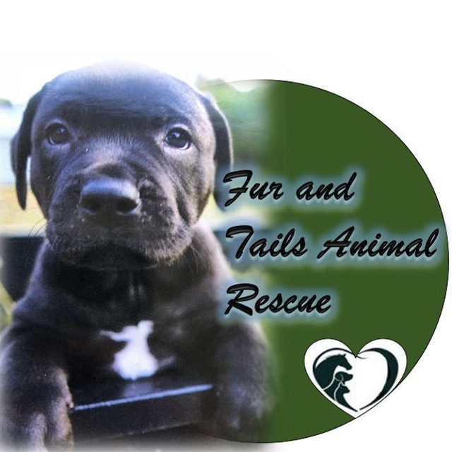 Fur and Tails Animal Rescue, Local Rescue in Collier County, FL | Saving Grace Pet Food Bank, Inc.