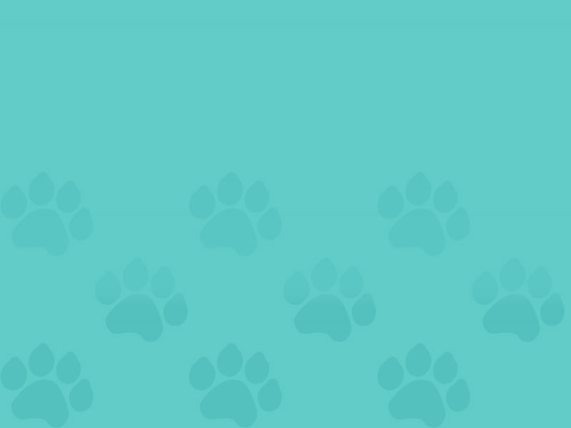 Teal Gradient Paw Prints | Saving Grace Pet Food Bank, Inc.